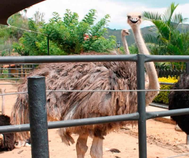 Plaza de las avestruces